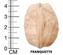 NUC ALTOIT soiul FRANQUETTE - anul 3 - de vanzare