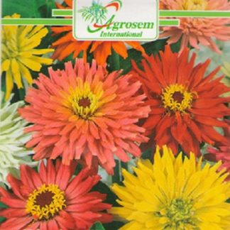Seminte Flori Carciumarese Gigante