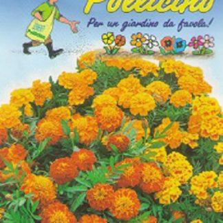 Seminte Flori Craite