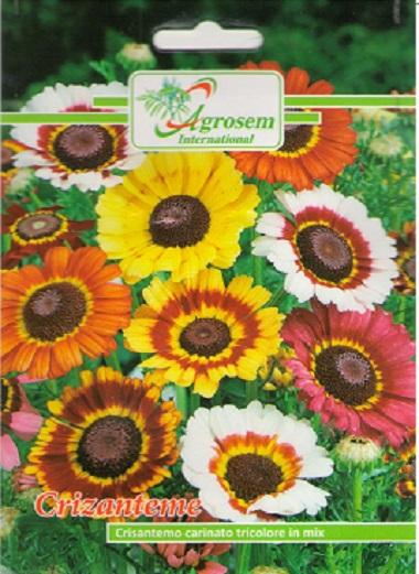 Seminte Flori Crizanteme Mix