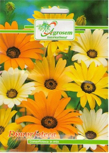 Seminte Flori Dimorfoteca Mix
