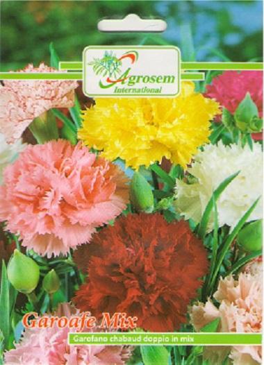 Seminte Flori Garoafe Mix