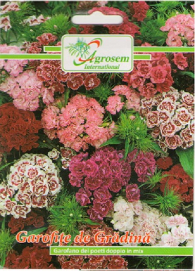 Seminte Flori Garofite de Gradina Mix