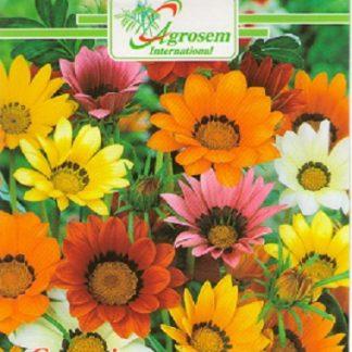 Seminte Flori Gazania Mix