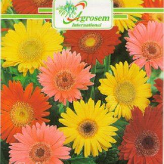 Seminte Flori Gerbera Mix