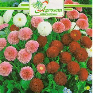 Seminte Flori Margarete