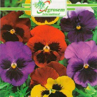 Seminte Flori Panselute Gigante Mix
