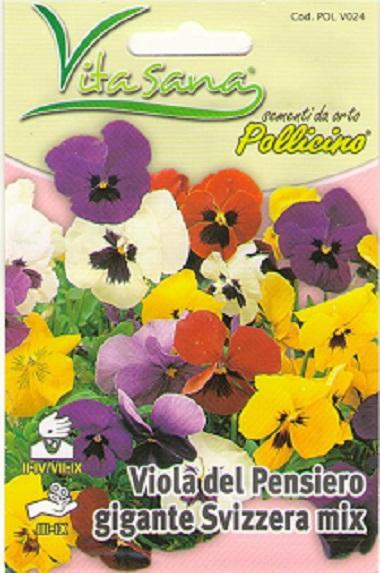Seminte Flori Panselute