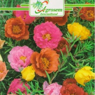 Seminte Flori de Piatra
