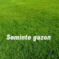 Seminte Gazon Soare 1 KG