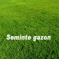 Seminte Gazon Standard 1 KG