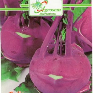 Seminte Gulie Purple Viena