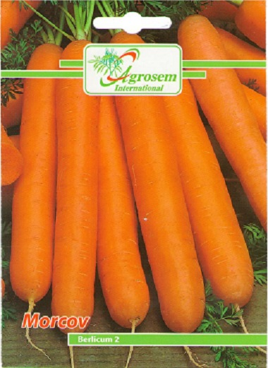 Seminte Morcov Berlicum 2