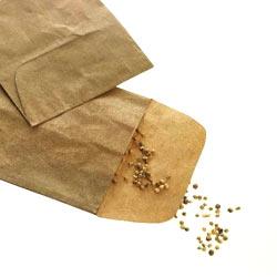 Seminte Morcov Flakee 10 G