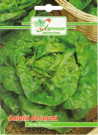 Seminte Salata Iarna Verde D'Inverno