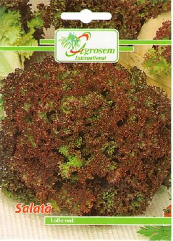 Seminte Salata Lollo Red