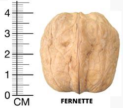 NUC ALTOIT soiul Fernette - anul 3 - de vanzare